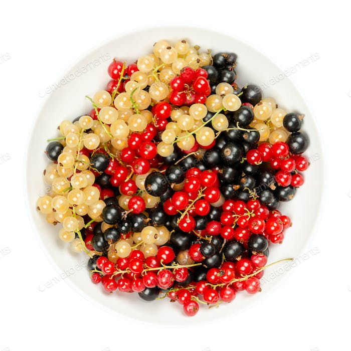 White, red and black currant berries, in a white bowl, from above