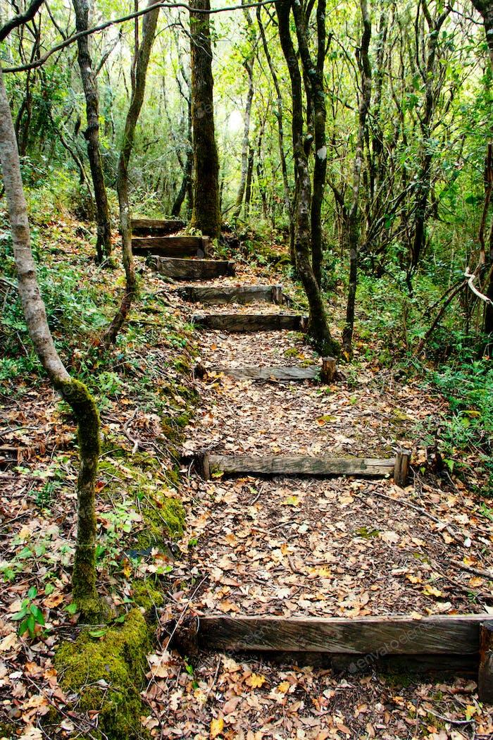 Path in the natural reserve of Morigerati