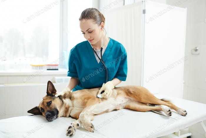 Healthcare of dog