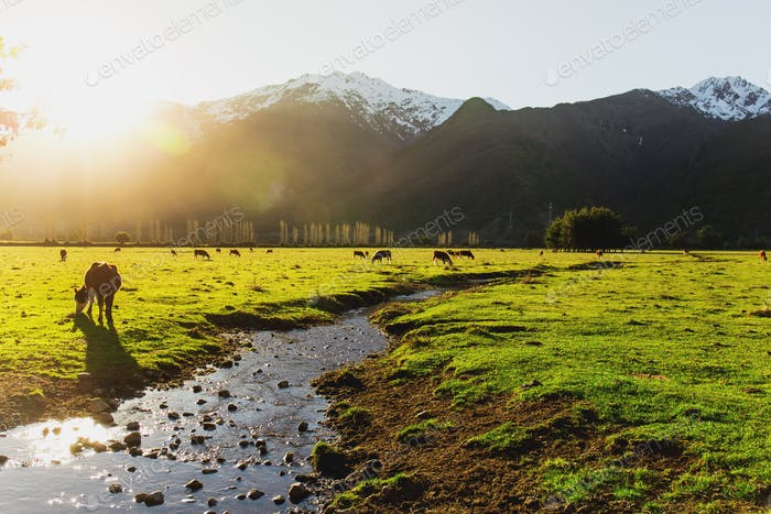 Argentine Chilean Patagonian landscape with freely grazing cows near a river