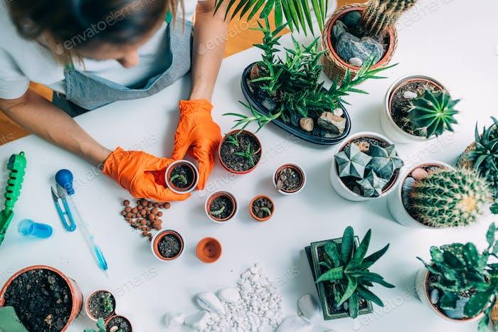 Gartenarbeit und Pflanzung zu Hause