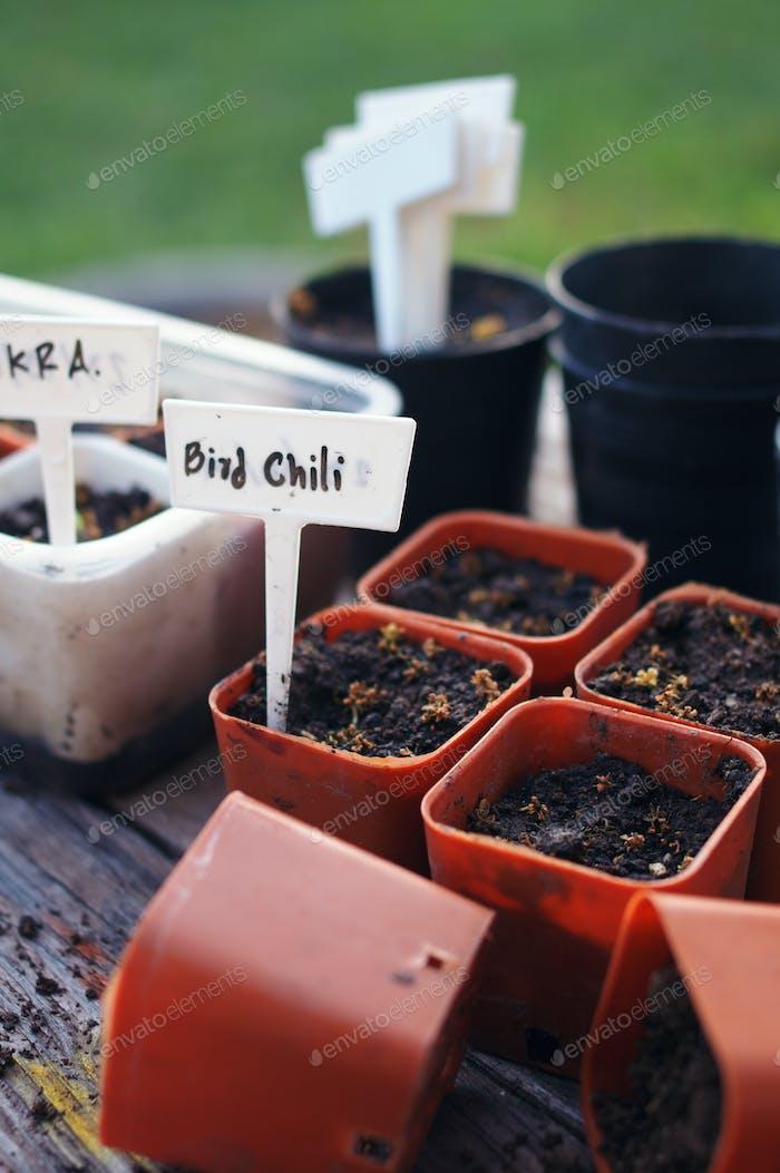 Preparing the little pot for seedling