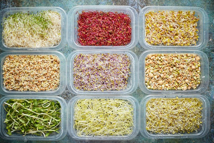 Various kind healthy microgreen sprouts in small packages placed on the stone background