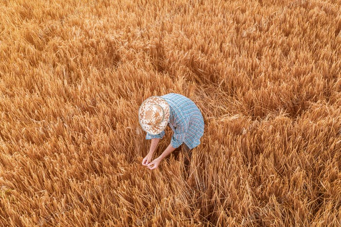 Aerial view of farmer standing in ripe wheat crop field
