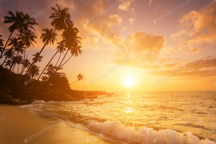 Sunset on the beach with coconut palms.