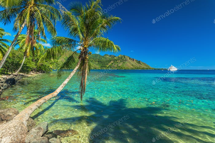 Palm Trees and quiet bay at Moorea in Tahiti