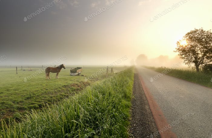 horse on pasure at misty sunrise