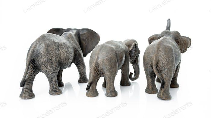 Elefantenfamilie. Rückseite des Elefanten isoliert auf weißem Hintergrund.