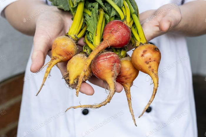 Close up of chef holding a bunch of colourful beets.