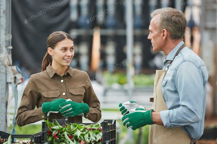 Arbeiter Verpackung Blumen in Plantage