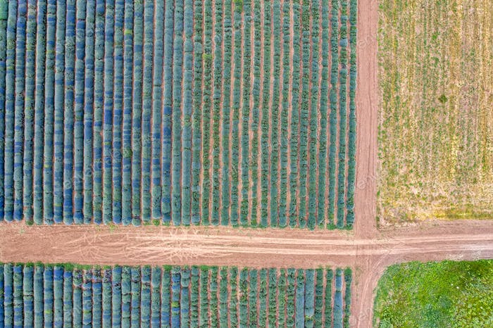 Agriculture drone shot