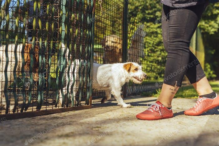 Woman releasing dogs from pen