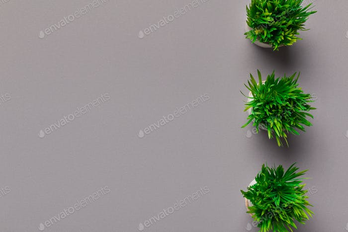 Border of grassy plants in round pots on grey background