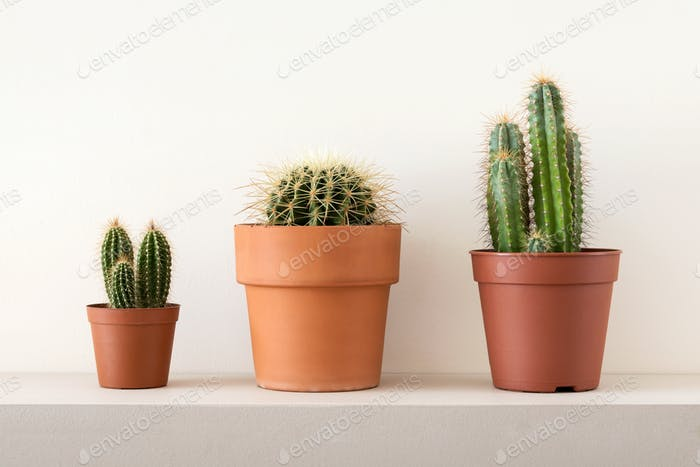 Pots of cactuses on shelf