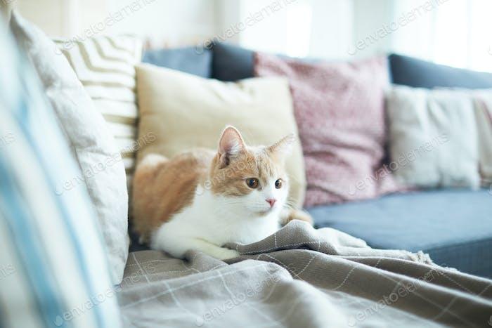 Gato acostado en el sofá