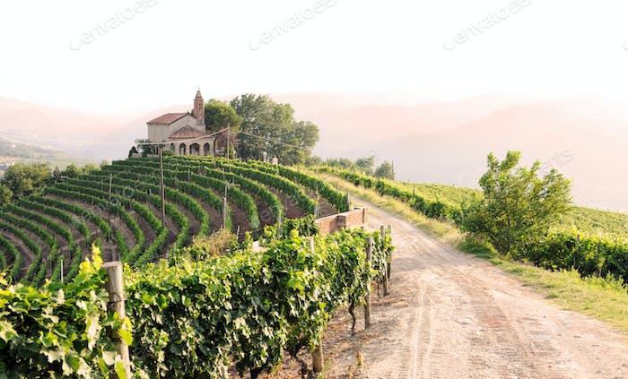 Landscape with vineyards and church