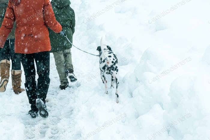 Happy family walking dalmatian dog in winter snow