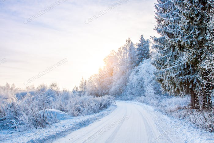 snowy road in the winter forest