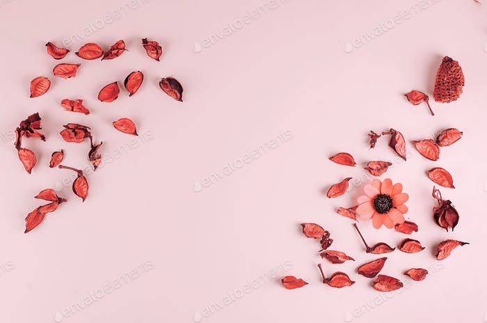 Flowers composition with, flowers, petals, buds on pastel pink background,