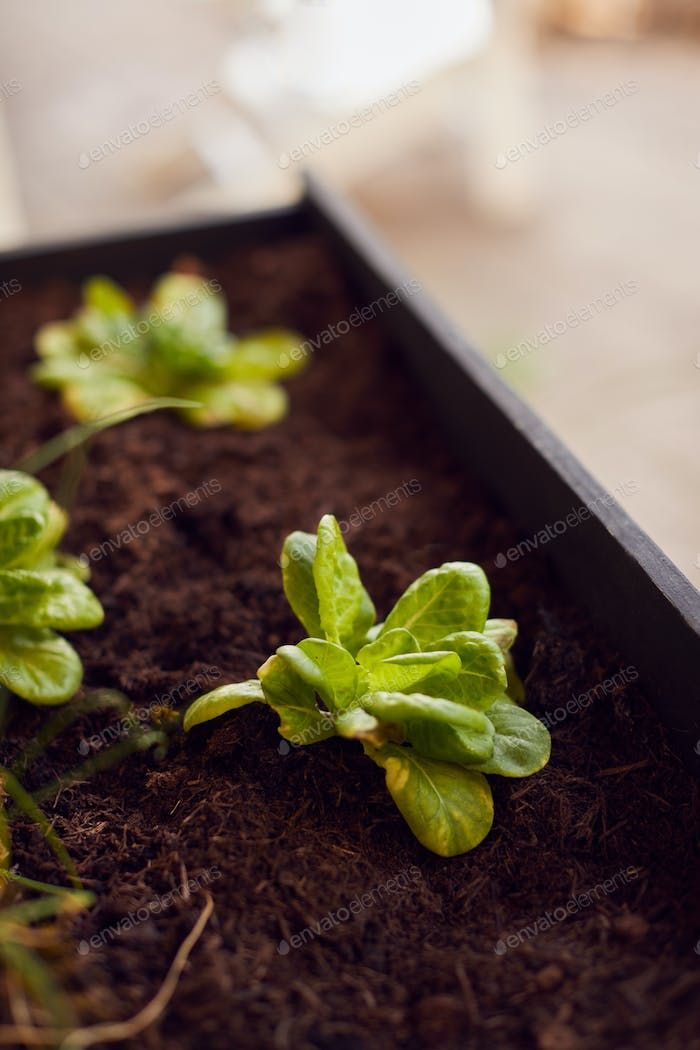 Close Up Of Plants Into Wooden Garden Planter At Home