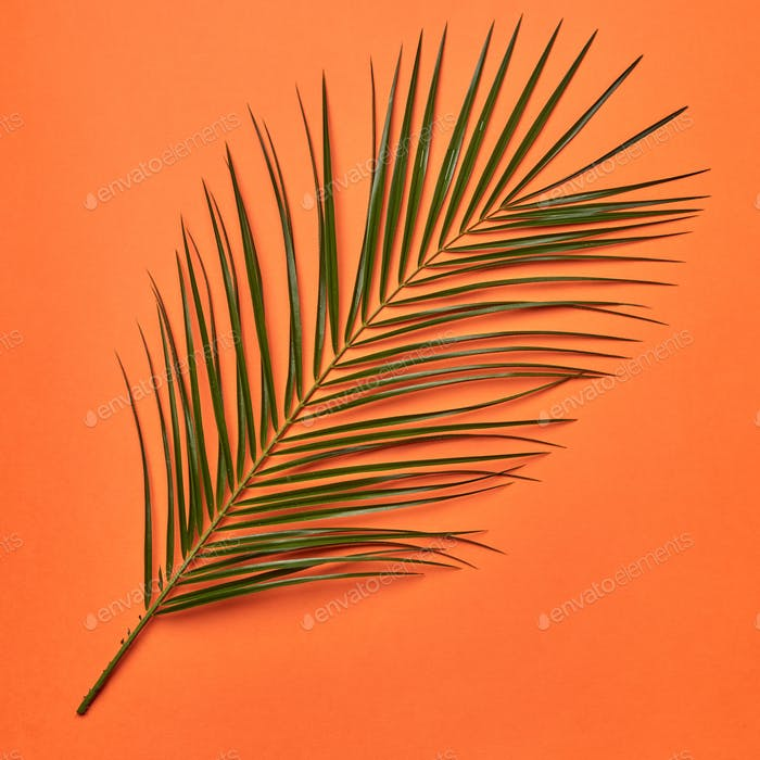 Palm fresh leaf presented on an orange background with copy space. Natural layout. Flat lay