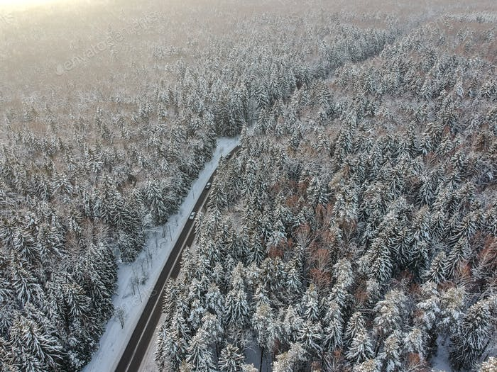 Winter forest with a road on a cold day