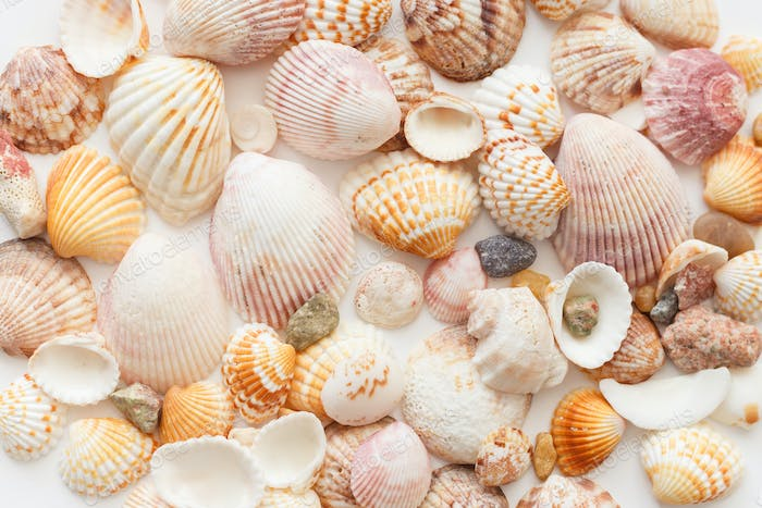 Seashells background seamless rexture, close-up view