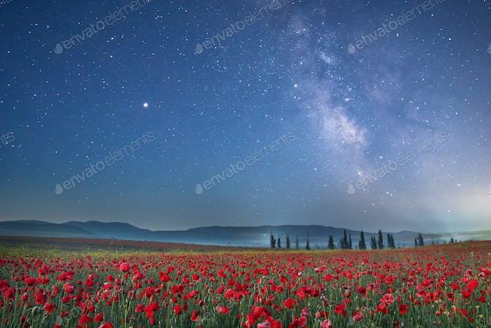 Poppy field at night.