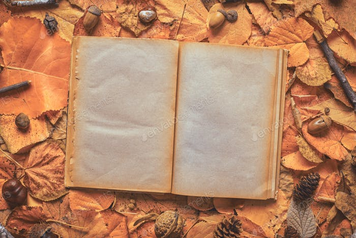 Blank pages of an old open book on creative autumn background