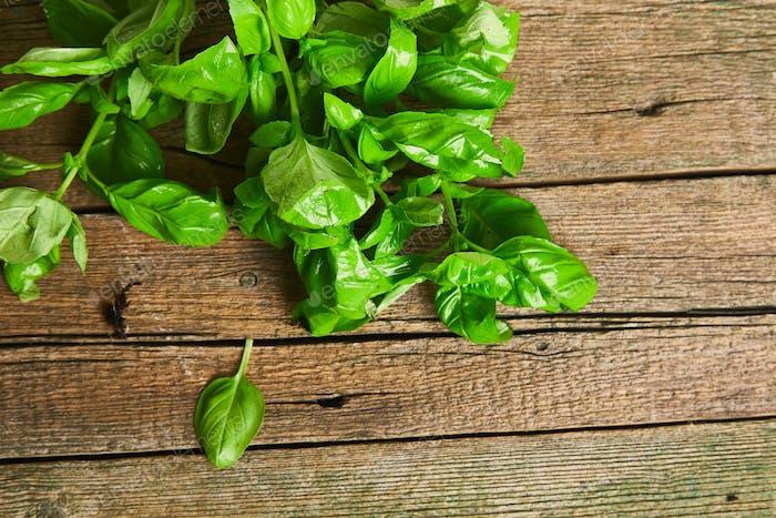 Fresh basil on a wooden background. Green basil.