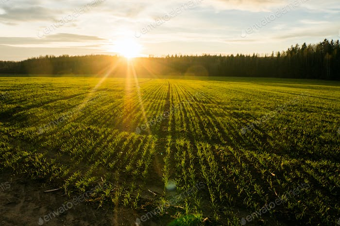Spring Field at Sunrise With Back Light, Belarus, Lahoysk