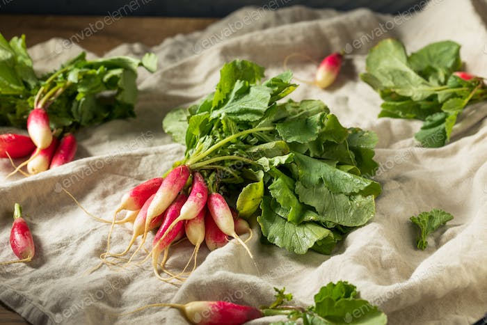Raw Organic Long Breakfast Radishes