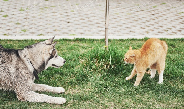 Cat against a dog, an unexpected meeting in the open air