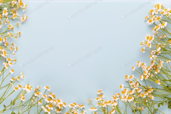 Kamille Aromatherapie Thema, handgemachte Kosmetik. Raum für textessentielle und medizinische Blumen Kräuter