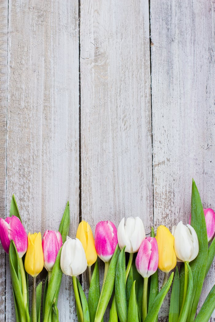 Colorful tulips on a shabby wooden background for Mother's Day. Spring Easter Holiday Concept.