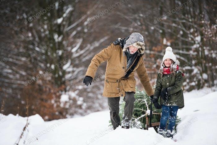 Großvater und kleines Mädchen immer einen Weihnachtsbaum im Wald.