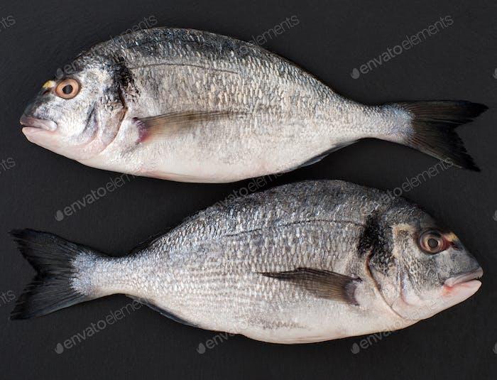 Two raw fish Dorado on a black stone background.