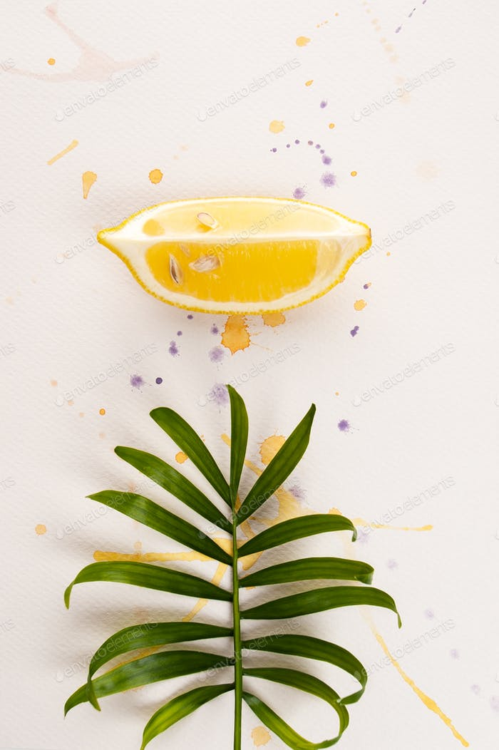 A slice of lemon and a leaf of a tropical plant lie on white wat