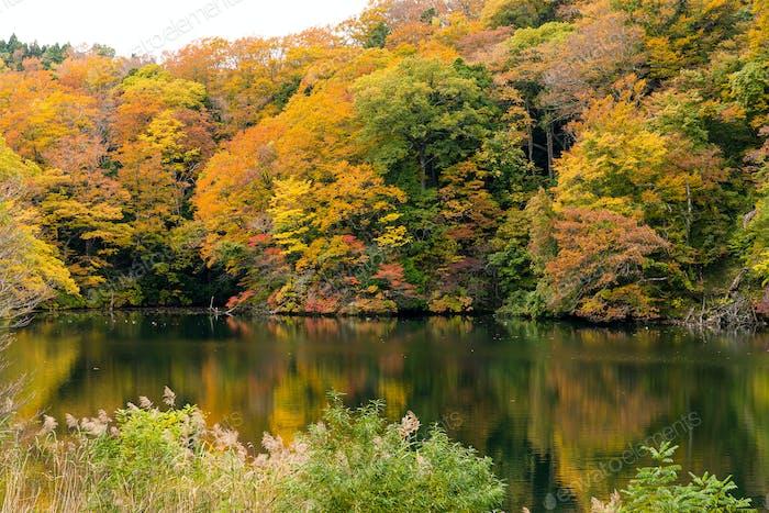 Lake pond in autumn fall season