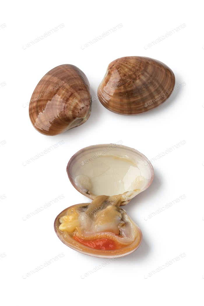 Fresh raw open smooth clam