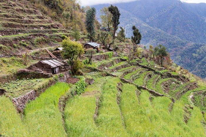 Terrassenplantage an Hügeln in Nepal