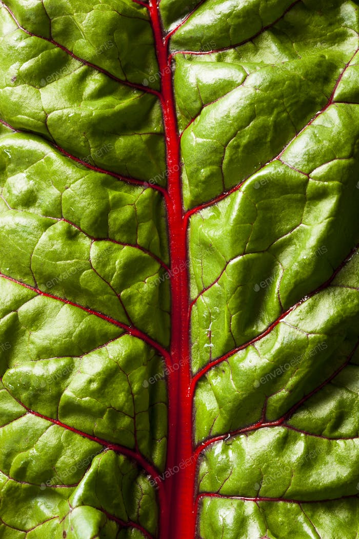 Raw Organic Red Swiss Chard