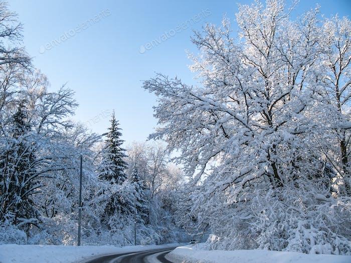 Winterstraße in einem Wald