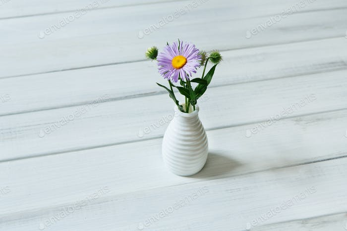 Aster amellus flower bouquet at white table
