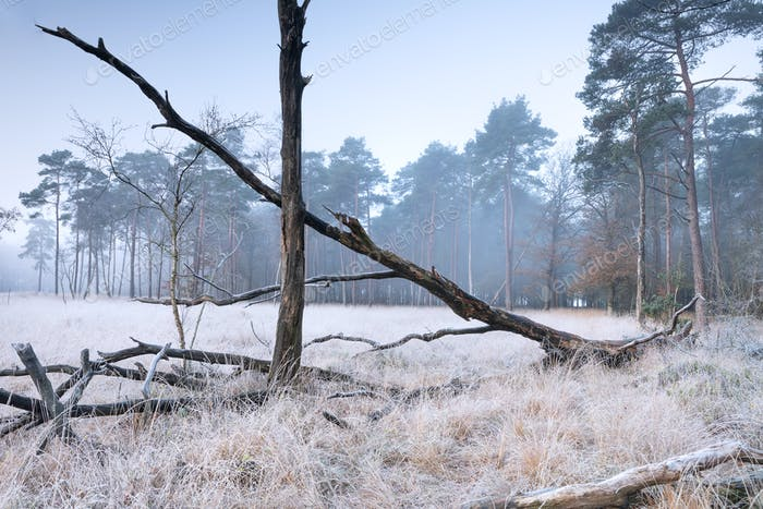 fallen trees on white frosted forest meadow