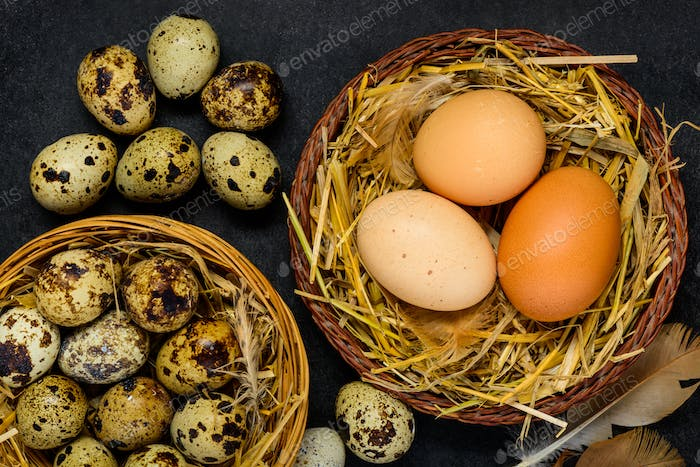 Quail and Chicken Eggs in Nest