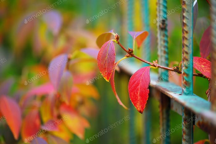 colorful vegetation in Autumn season