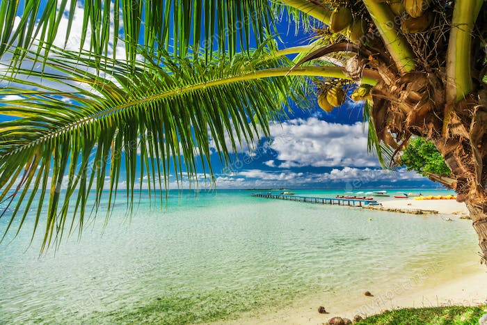 Beach with palm tree on the north side of tropical Moorea island