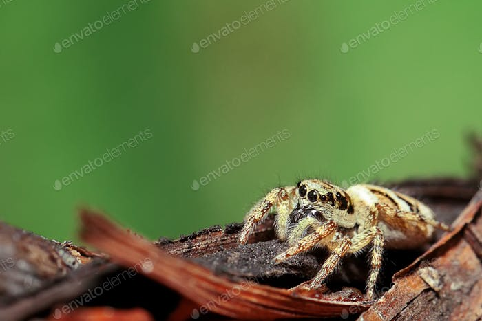 Spider on a branch. Extreme close up