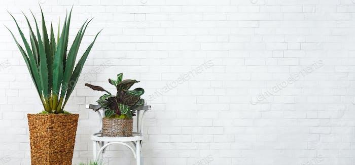 Exotische Heimpflanzen Konzept